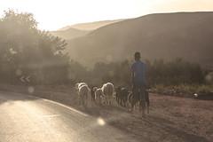 Modern Shepherd (daverodriguez) Tags: morocco atlasmountains