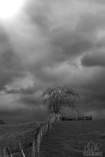 flockton lone tree