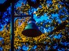 Light fixture with fall foliage. Leica M3 Macro-Elmar 90 Velvia 50 (danielnotnow1) Tags: leica leicafilm leicaanalog leicam3 leicam4 summicron50mmv4 fujivelvia50 slidefilm color colour film filmphoto filmphotography 35mm 35mmfilm 35mmfilmphoto analog analogue vintagecamera vintagelens sunny16 colors explore colorsinourworld colorfullaward flickrelite