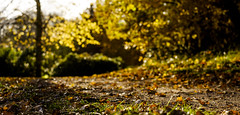 Can every day be like this? (Wouter de Bruijn) Tags: fujifilm xt1 fujinonxf35mmf14r fall autumn autumnal leaves colour autumncolours sun light warmth yellow forest trees nature landscape lightscape outdoor bokeh depthoffield westhove mantelingen oostkapelle walcheren zeeland nederland netherlands holland dutch