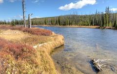 Autumn colors (E.K.111) Tags: autumn yellow grandteton river nationalpark outdoors nature water trees