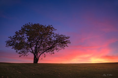 Gone with the Wind (Ping...) Tags: autumn lone tree red sunset michigan