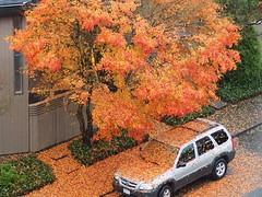 Great Coverage of Fallen Leaves - (Irene, W. Van. BC) Tags: covered groundcover fall fallleaves fallscenes fat fallenleaves falltrees leavesonground autumn autumnscenes autumnleaves autumncolours autumnfoliage autumntrees beautifulnature wonderfulnature outdoors outdoorscenes colours colourfulleaves cars car suv 1001nights 1001nightsmagiccity tree trees alltrees beautifultrees greatcoverage greatcoverageoffallenleaves