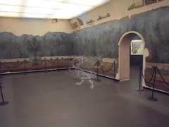 Gli affreschi della villa di Livia a Palzzo Massimo _10