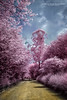 Infrared (Jefferson Allan - Photographer) Tags: jeffersonallan paisagens ir infrared cursoinfrared fotoinfravermelho filtro720nm