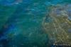 USS Arizona Memorial | Pearl Harbor (M.J. Scanlon) Tags: ussarizona arizona ship boat usnavy scanlon mojo pearlharbor hawaii water harbor memorial island photo photography photographer photograph picture canon capture trip travel wwii worldwarii attack japaneseattack battleship war oil