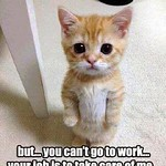 Funny Quotes : Top 40 Funny animal picture quotes #funny quotes... thumbnail