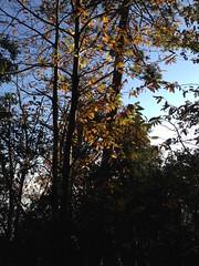 14 (emmess2) Tags: campiglia cinqueterre spezia autumn fall leaves