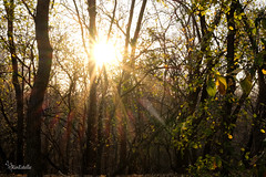 Sun Rays (RinEstellePhotography) Tags: arborhillsnaturepreserve arborhills nature fall red orange yellow sunset leaves unamusedboyfriend