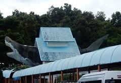 Big Shark (mikecogh) Tags: chiangmai aquarium walkway covered shark big novelty promotion