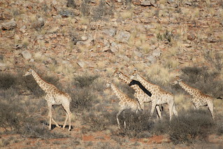 South Africa Hunting Safari - Northern Cape 84