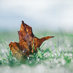The Coolness of Autumn thumbnail