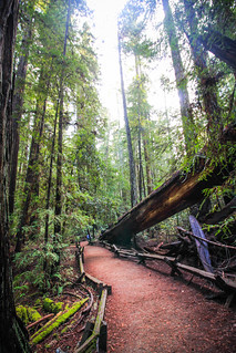Path in Armstrong Redwoods State Natural Reserve, Ca