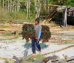 Lombok - village d'Ekas (mcbail) Tags: lombok ekas culture algues agaragar sasak