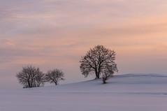 Winter (Karl-Heinz Bitter) Tags: altenhasungen bäume deutschland europa hessen jahreszeiten pflanzen winter germany plants trees schnee abendhimmel landscape landschaft karlheinzbitter