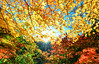 楓芒(DSC_6763) (nans0410(busy)) Tags: japan shizuokaprefecture maple redleaves sunlight scenery outdoors sunstar すまたきょう おおいがわ oiriver 日本 靜岡縣 川根本町 秋天 寸又峽 楓葉 紅葉 大井川 日芒