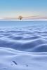 es war einmal..... (SonjaS.) Tags: schnee snow schatten winter baum tree natur kalt happiness landschaft landscape sonjasayer