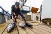 Fisheries in San Diego, CA (California Sea Grant) Tags: california sandiego sandiegobay fish fisheries fishermen fishing