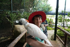 "Tracey with a Parrot • <a style=""font-size:0.8em;"" href=""http://www.flickr.com/photos/28558260@N04/38983362781/"" target=""_blank"">View on Flickr</a>"
