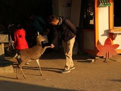 IMG_4982 (jumppoint5) Tags: deer handshake hello human miyajima hiroshima urban japan together friends autumn