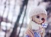 6th of December (Untuvikko) Tags: pullip prupate caroline doll angelicpretty grooveinc