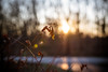 Distant Sun 342/365 (Watermarq Design) Tags: sunset nature sun cold winter wintersun distant 365project