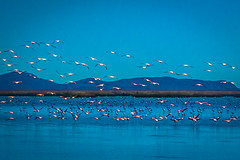 There were hundreds of flamingoes on the lakes as we left Oruro.