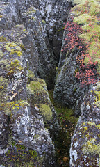 autumnal rift valley glimpse (lunaryuna) Tags: iceland southwesticeland riftvalley thingvellir nationalpark volcanicrock lichens heather autumn season seasonalbeauty autumncolours nature lunaryuna