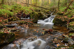 Little Waterfall (gillesfrancotte) Tags: 2017 amblève ardennes autumn aywaille chefna d800 nikon november outdoor quarreux stoumont automne cascade creek eau fall landscape longexposure nature novembre stream torrent water waterfall waterscape