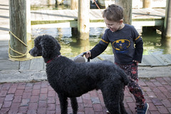 Sam and Coaster King (quinn.anya) Tags: sam preschooler coasterking dog poodle dock edgartown marthasvineyard dogwalking