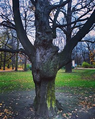 Magic tree (basiamarcisz) Tags: warsaw warszawa łazienkikrólewskie november leaves face magic jesień autumn nature tree drzewo