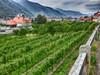 Weißenkirchen Niederösterreich (Der Kremser) Tags: österreich casio eu europa europe 2017 austria wein vine weinlese vineyard grapeharvest hdr niederösterreich nö loweraustria