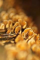 Mushrooms (De Rode Olifant) Tags: marjansmeijsters orange mushroom nature fungus