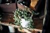 December Foliage (moaan) Tags: kobe hyogo japan jp green plant pottedplant ornament stilllife onthecorner littlethings dof depthoffield bokeh bokehphotography canon canonphotography canoneos5dsr zeissotus1455ze otus1455 utata 2017