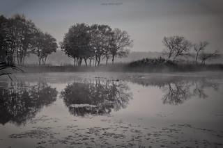 Monochrome Reflection