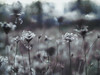 Muted Colors (brianagee1) Tags: gx8 panasonic lumix muted colors 58mm f14 14 metabones speed booster focal reducer nature bokeh plants dead plant flower flowers lightroom edit edited m43 micro four thirds m 43 fixed lens