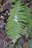 DSC_9212 (bromand) Tags: outdoor nikon d90 nikond90 105mmf28 sigma105mmmf28 geotagger solmeta solmetan1 geotaggersolmetan1 leaf