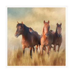 Playing with horses. (BirgittaSjostedt) Tags: creation animal horse texture paint art magicunicornverybest ie grass sky field birgittasjostedt