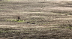 alone (explore 15/11/2017) (M.a.r.t.Y) Tags: valdorcia marty hills colors nature 5dmarkiii canon