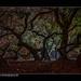 Nachtschicht / night shift (H.Roebke) Tags: süntelbuche de canon5dmkiv foliage landschaft niedersachsen nature langzeitbelichtung germany nightshot nachtaufnahme rural wald natur herbst forrest sun gegenlicht contrast baum tree contrejour sonne autumn 2017 color landscape farbe longtimeexposure lightroom canon1635mmf28lisiii