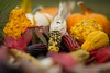 Depth of field (K.Yemenjian Photography) Tags: georgia unitedstates bumblebee closeup macro depthoffield corn colors colorful indiancorn autumn fall pumpkins squash