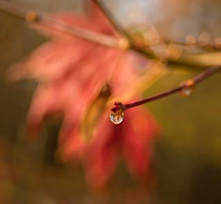 Autumn droplet