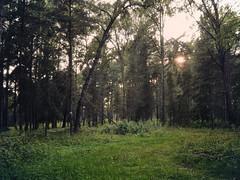 forest (ibryuzgin) Tags: sonyhx20v digitalphotography colorgrid adobephotoshop captureone cameraraw sometimes sometimesphoto photographer pleinair landscape смоленск smolensk