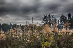 I skoven
