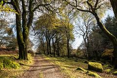 The track to Deancombe on Dartmoor- NK2_4801 (Jean Fry) Tags: dartmoor dartmoornationalpark deancombe devon moorland nationalparks tracks trees uk autumn countrytracks westcountryuk