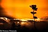 Sunrise at Everglades National Park (BobHartmannPhotography) Tags: c2017bobhartmann bobhartmannphotography hartmann landscape 1365 bobhartmann 365 everglades bobhartmanncom wwwbobhartmanncom evergladesnationalpark exhibitionannkolb2016 swr