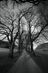 Mystical (milance1965) Tags: mystisch mystical nikon himmel bäume baum landschaft schwarzweiss black blackwhite d7000 sigma