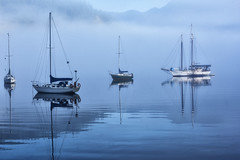 8079-2sm (torriejonvik) Tags: sailboats trees fog pacific northwest cove