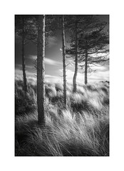 Marram Sea (vuzephotography.co.uk) Tags: infrared anglesey