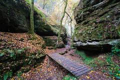 Aesbach Valley (martinstelbrink) Tags: aesbachtal aesbachvalley luxemburg luxembourg sandstone sandstein eifel südeifel deutschluxemburgischernaturpark germanluxembourgnaturepark sony alpha7rii a7rii voigtländervmeclosefocusadapter bridge brücke herbst autumn aesbach voigtländerheliar15mmf45iii voigtlanderheliar15mmf45iii voigtländer voigtlander heliar 15mm f45